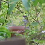 窓から見える小鳥