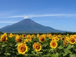 富士山と向日葵☼